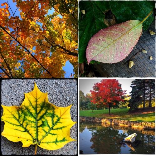 Fall in MN