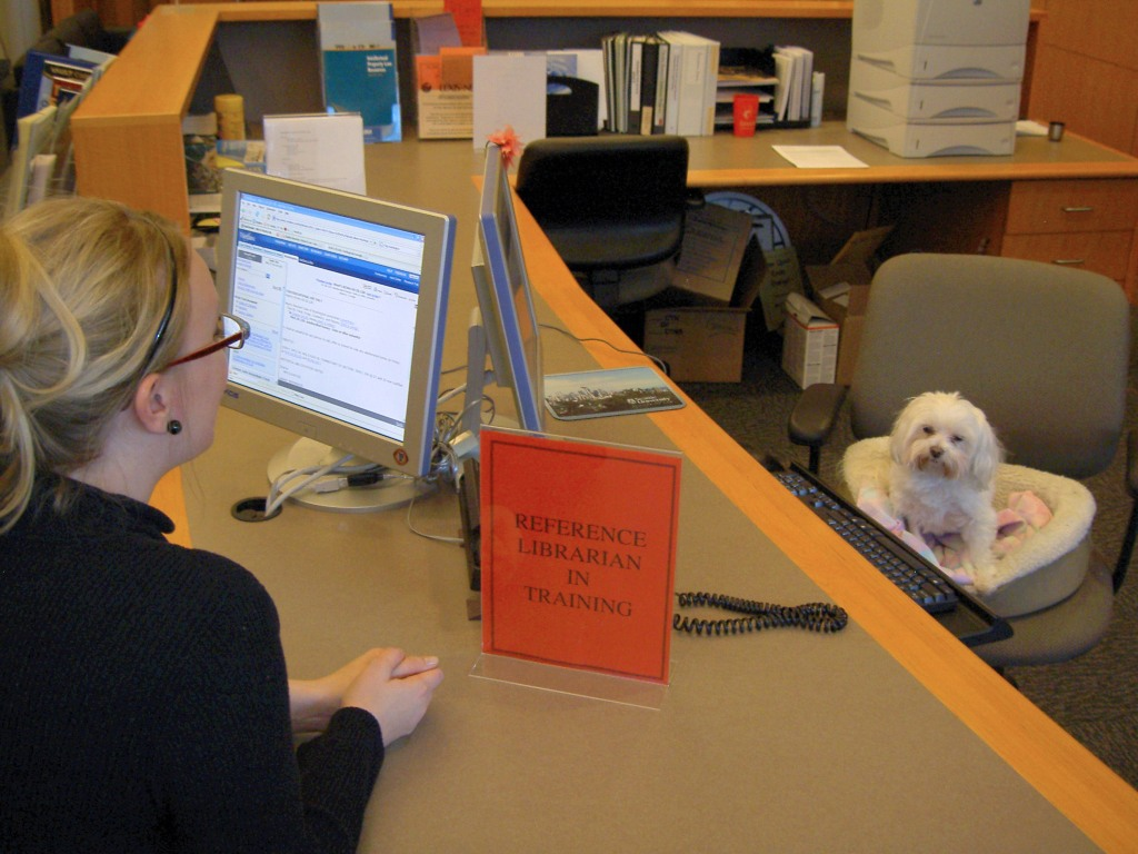 """Image of Dog sitting at reference desk with sign stating """"Reference Librarian in Training"""""""